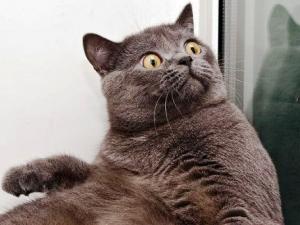 cat-surprised